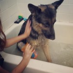 His first bath. He wasn't such a fan, but liked…