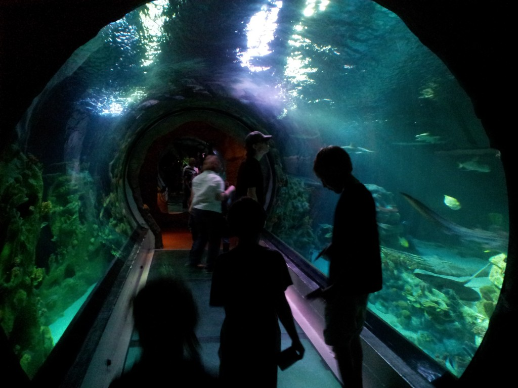 aquariumtunnel